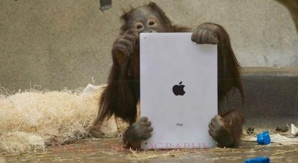 Orang iPad